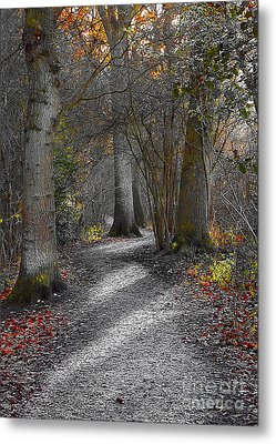 Enchanted Woods Metal Print by Linsey Williams