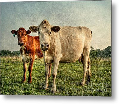 Engagement Session Metal Print by Darren Fisher