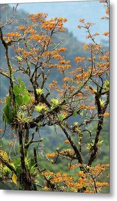Erythrina Poeppigiana Tree And Epiphytes Metal Print by Bob Gibbons