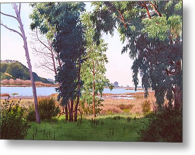 Eucalyptus Trees At Batiquitos Lagoon Metal Print by Mary Helmreich