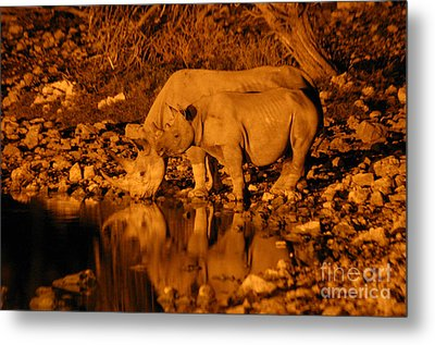 Evening Reflection Metal Print by Alison Kennedy-Benson