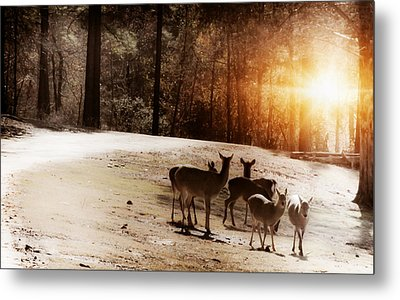 Evening Social  Metal Print by Kim Henderson