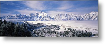 Evergreen Trees On A Snow Covered Metal Print by Panoramic Images