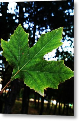 Every Story Has A Beginning... Metal Print by Lucy D