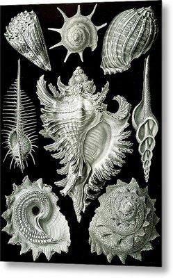 Assorted Sea Shells Metal Print by Ernst Haeckel