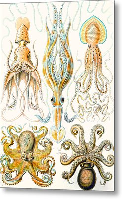 Examples Of Various Cephalopods Metal Print by Ernst Haeckel