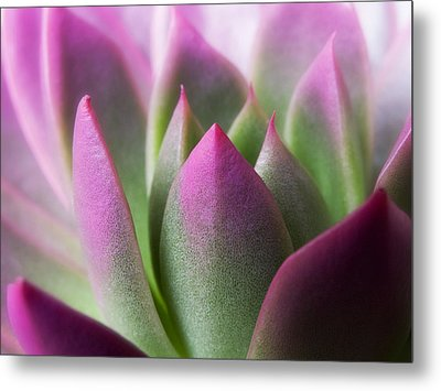 Exotic - Pink Purple Green Flower Landscape Photograph Metal Print by Artecco Fine Art Photography