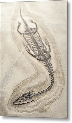 Extinct Triassic Reptile Metal Print by Science Photo Library
