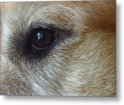 Eye See You Metal Print by Lisa Phillips