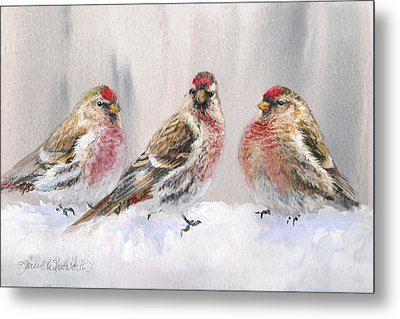 Snowy Birds - Eyeing The Feeder 2 Alaskan Redpolls In Winter Scene Metal Print by Karen Whitworth