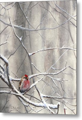Eyeing The Feeder Alaskan Redpoll In Winter Metal Print by Karen Whitworth