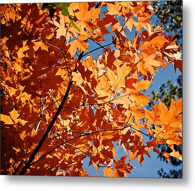 Fall Colors 2 Metal Print by Shane Kelly