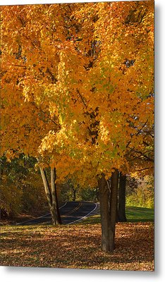 Fall Colors Metal Print by Adam Romanowicz