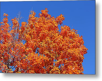 Fall Foliage Colors 19 Metal Print by Metro DC Photography