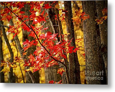 Fall Forest Detail Metal Print by Elena Elisseeva