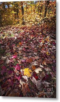 Fall Forest Floor  Metal Print by Elena Elisseeva