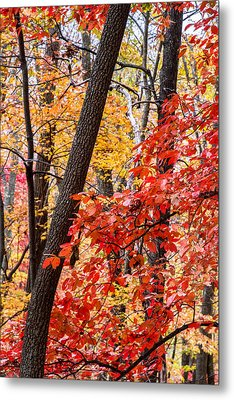Fall In The Forest Metal Print by John Haldane