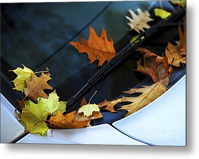 Fall Leaves On A Car Metal Print by Elena Elisseeva
