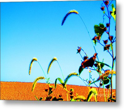 Fall Skies On Soybeans Farm Metal Print by Tina M Wenger