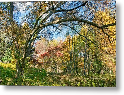 Metal Print featuring the photograph Fall Tapestry Of Colors And Textures by A Gurmankin