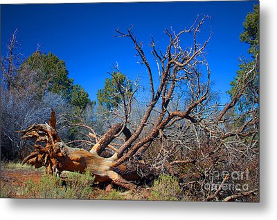 Fall Tree Metal Print by Ivete Basso Photography