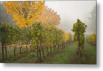 Fall Vineyard Colors Metal Print by Jean Noren