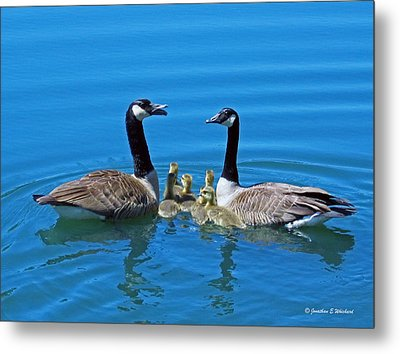 Family Canada Geese Metal Print by Jonathan Whichard