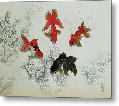 Fantail Goldfish Metal Print by Matthew Schwartz