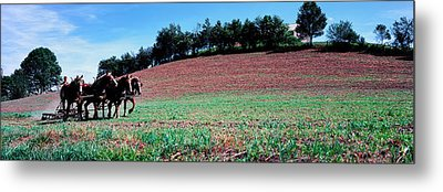 Farmer Plowing Field With Horses, Amish Metal Print by Panoramic Images
