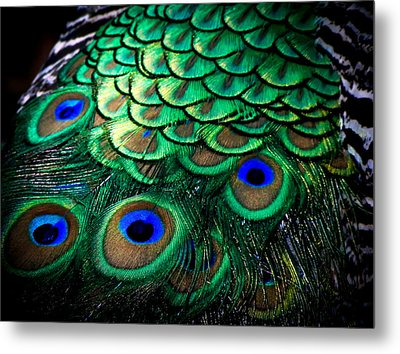 Feather Abstract Metal Print by Karen Wiles
