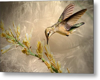 Feathers Metal Print by Donna Kennedy