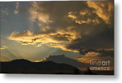 Feathers Of Sunlight Metal Print by Charles Kozierok