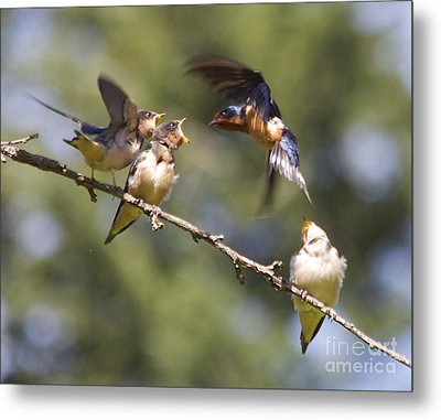 Feeding Time Metal Print by Tracey Levine