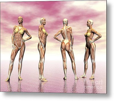 Female Muscular System From Four Points Metal Print by Elena Duvernay