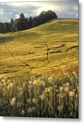 Field And Weeds Metal Print by Latah Trail Foundation