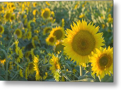 Field Of Happiness Metal Print by Rima Biswas