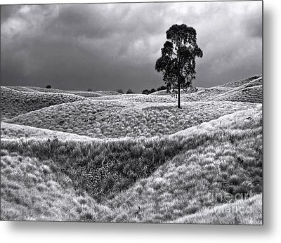 Field Of Saddle Road Dreams Metal Print by Ellen Cotton