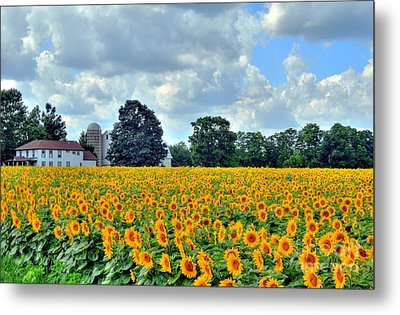 Field Of Sunflowers Metal Print by Kathleen Struckle