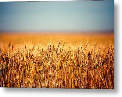 Field Of Wheat Metal Print by Todd Klassy