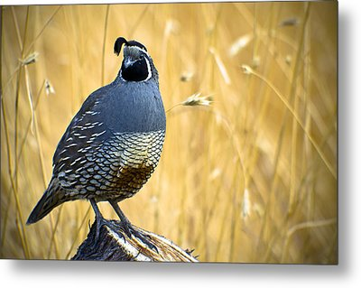 Fields Of Gold Metal Print by Joseph Rossi