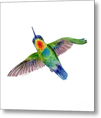 Fiery-throated Hummingbird Metal Print by Amy Kirkpatrick