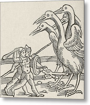 Fight Between Pygmies And Cranes. A Story From Greek Mythology Metal Print by English School