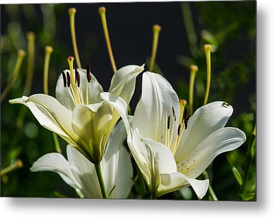 Finishing Blossoming - Featured 3 Metal Print by Alexander Senin