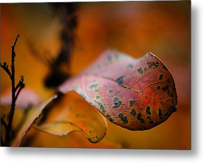 Fire Metal Print by Sarah Coppola