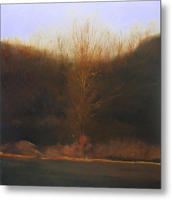 Fire Tree Metal Print by Cap Pannell