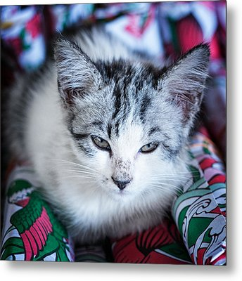 Firecracker Kitten Metal Print by Zoe Ferrie