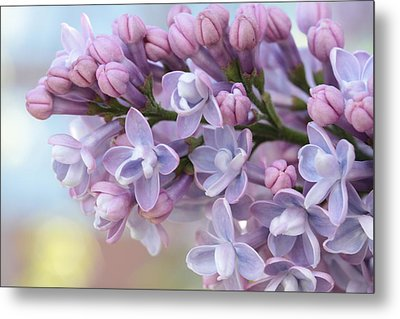 First Love's Soft Glow Metal Print by Connie Handscomb