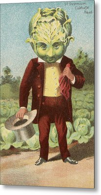First Premium Cabbage Head Metal Print by Aged Pixel