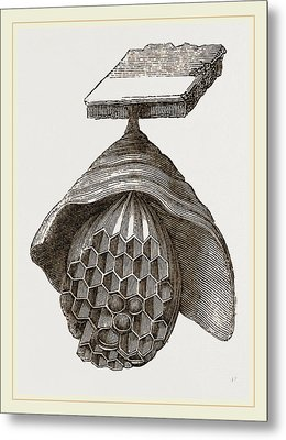 First Stage Of Hornets Nest Metal Print by Litz Collection