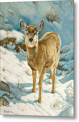 First Winter  - Fawn Metal Print by Paul Krapf
